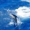 Wasabi Fishing - Blue Marlin